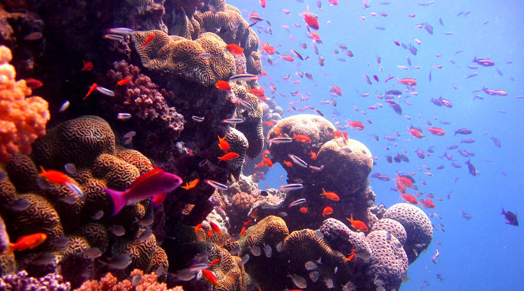The Great Barrier Reef ( photo from Flickr)