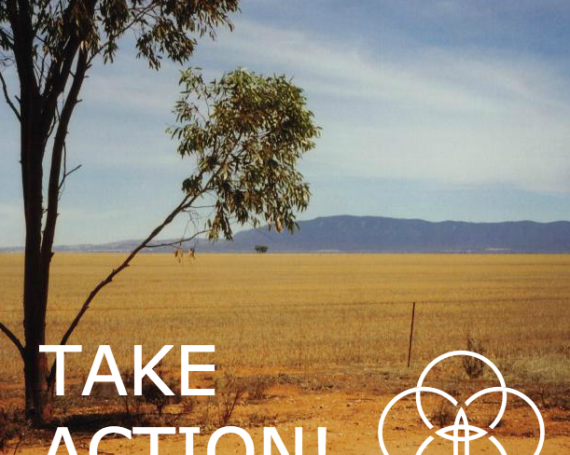 Tree of Life: Actions to bring Laudato Si' to Life